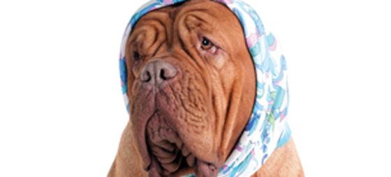 Spolorm hos hunder – en helserisiko også for mennesker