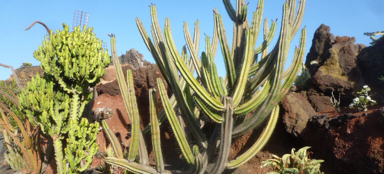 Jardin de Cactus, Kaktushagen på Lanzarote