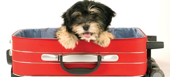 Når hunden tas med på reisen