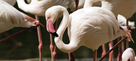Et godt flamingoår