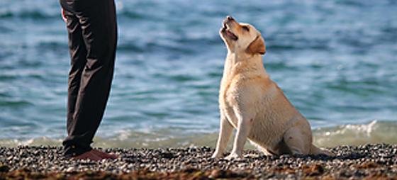 Å skaffe hund i Spania