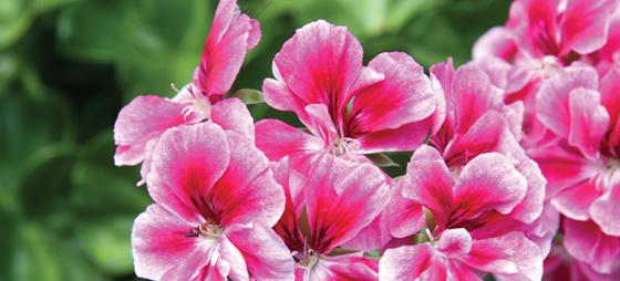 Hagespalten –  Velg de riktige blomstene til en solrik plass