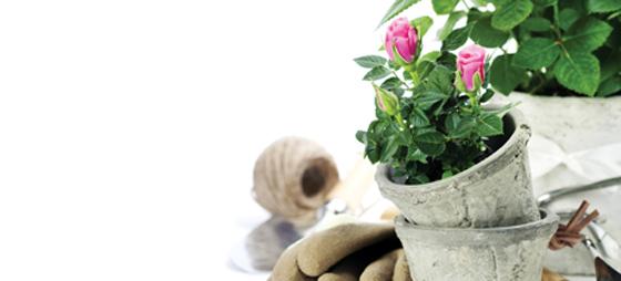 Hagespalten –  Gode råd mot lus og ugress for hageeiere