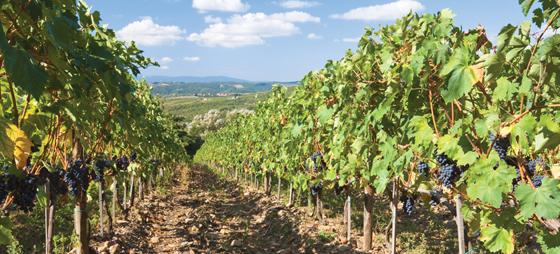 Vin, mat og kultur