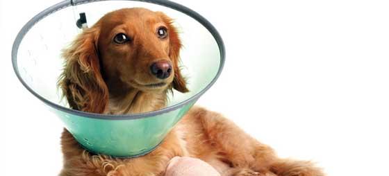 Leddplager hos hunder – gode resultater med naturlig fôrtilskudd