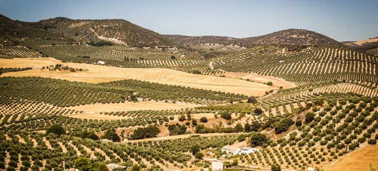 Sommeren 2019 på Costa del Sol og i Andalucía