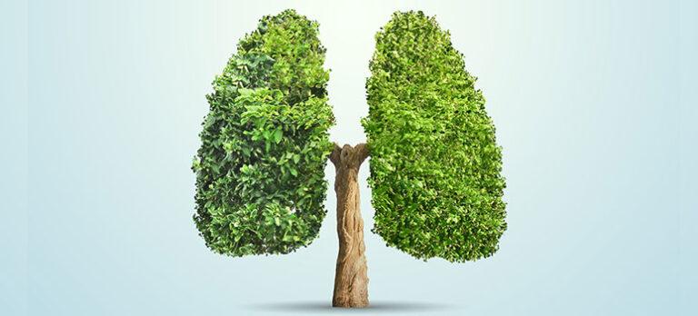 Lungene