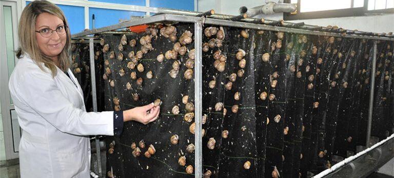 Andalucías hvite perler: Hos Villanueva del Trabuco serveres kaviar til festlige anledninger