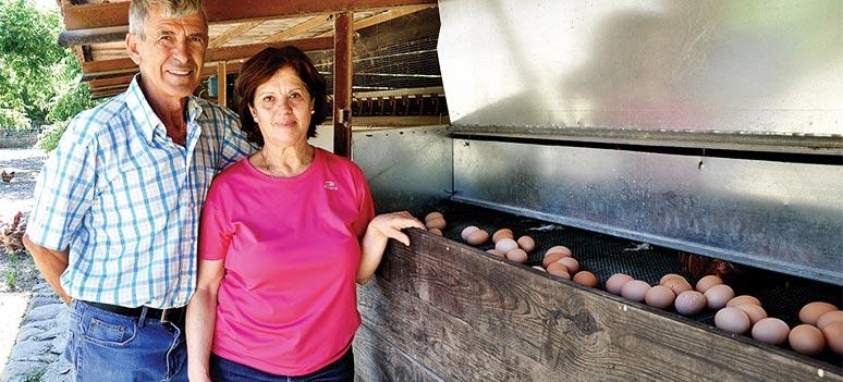 Sabor a Malaga Egg og Pecannøtter
