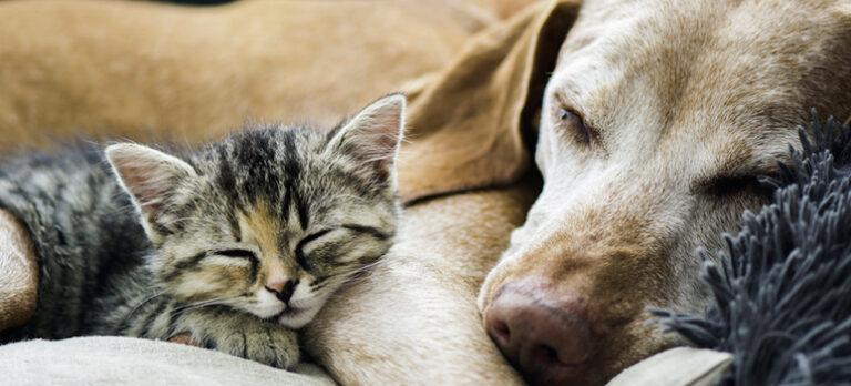 Ta med hund eller katt til Spania