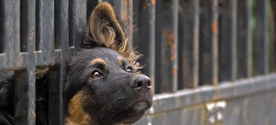Det er ikke ufarlig å adoptere hund i Spania