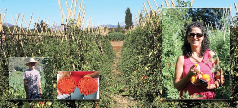 Sabor a Málaga: Kjempestore oksetomater setter smak på livet