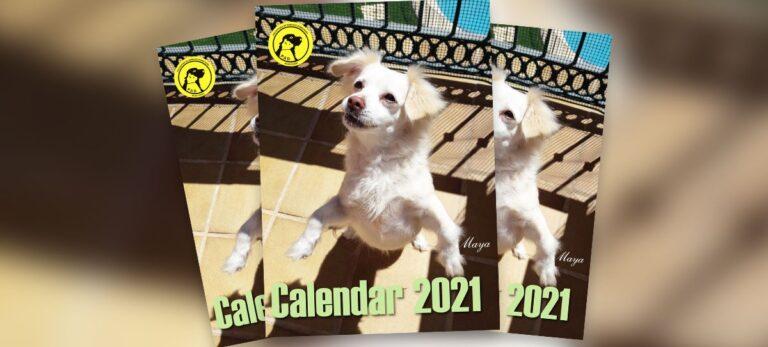 Den nye P.A.D. kalenderen er nå ferdig, så vær klar til 2021 og hjelp samtidig dyrene!