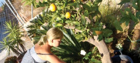 Plantet tre til Hennings minne
