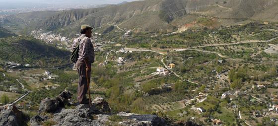 Gjeting i Sierra Nevada