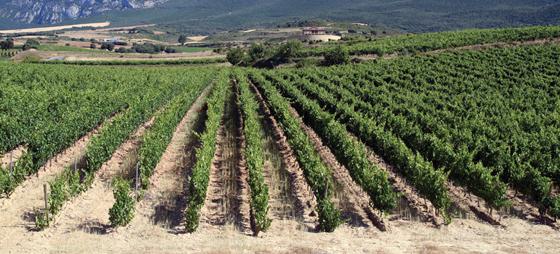 På tur til Rioja – En reise i golf, vin og kultur