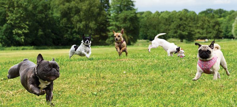 nyhed-hunde