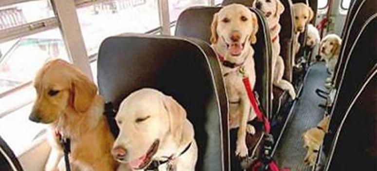 perros-bus