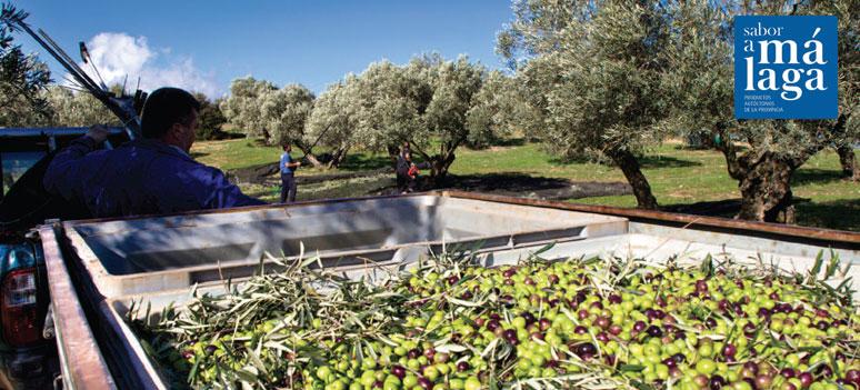 saborAMalaga oliven