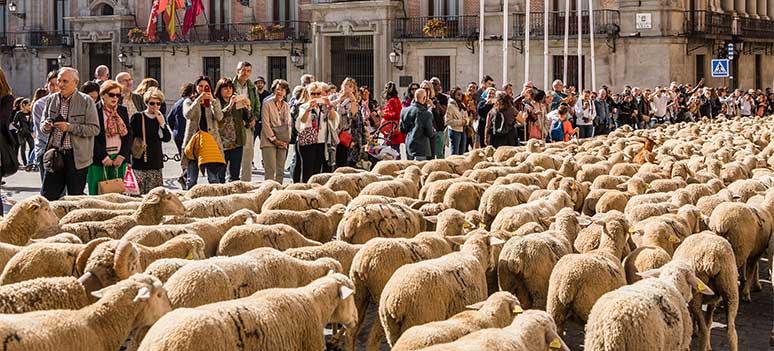 sauer inntar Madrids gater2