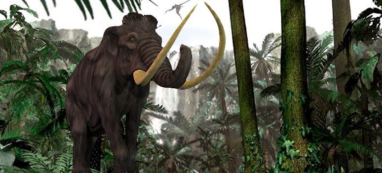 tt-mammut