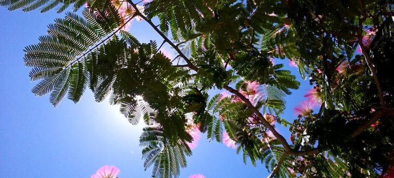 En voksende glede – 10 grunner til å plante et tre