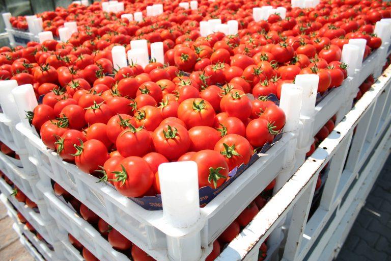 Rekordår for Andalucías eksport av landbruksprodukter