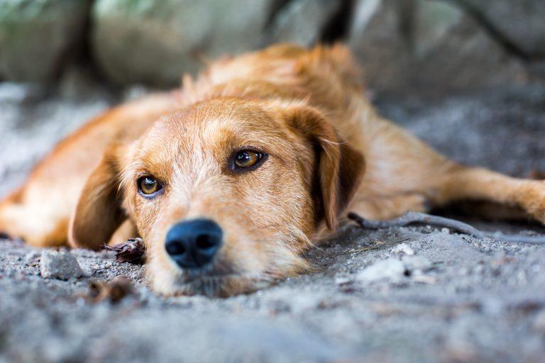 30% mer forlatte kjæledyr i sommer